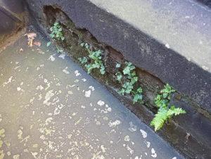 белые высолы на бетоне